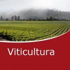 Viticultura, enología y cata (Online)